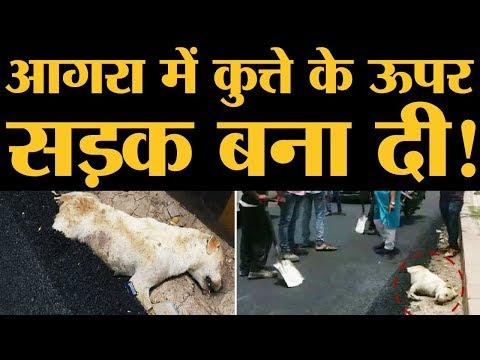 Xxx Mp4 कुत्ते के ऊपर सड़क बनने के बाद Uttar Pradesh Police ने और गड़बड़ कर दी The Lallantop 3gp Sex