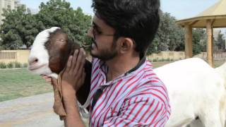 THE REAL QURBANI By OSKers