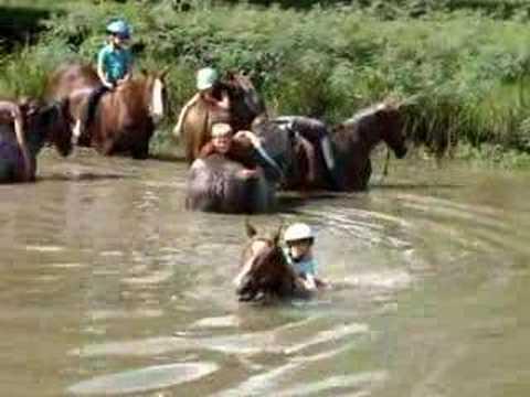 Swimming with Horses at Dan Keen Horsemanship Camp