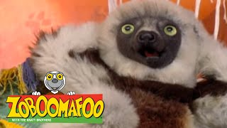 Zoboomafoo 212 - Super Lemur (Full Episode)