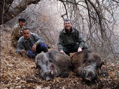 SANGLIER Wild BOAR HUNTING Chasse North TADJIKISTAN by Seladang