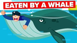 What If a Whale Accidentally Swallowed You?