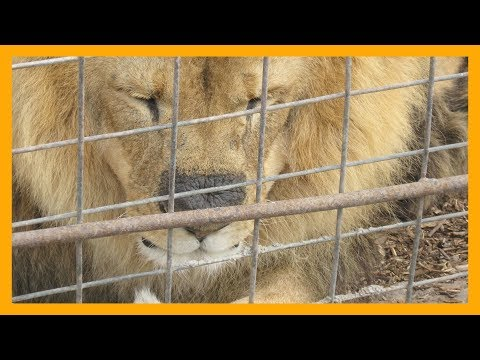 What No One Told You About Zoos