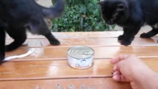 verrücktes Spiel schwarze Kätzchen