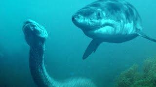Shark vs Python #HD