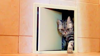 Hidden Camera Reveals what My Cat Does in the Bathroom