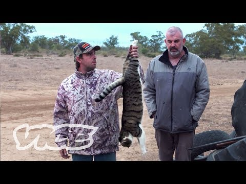 Xxx Mp4 Shooting Cats Australia S War On Feral Cats 3gp Sex