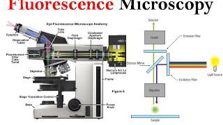 Fluorescence microscopy | fluorescence microscope principle