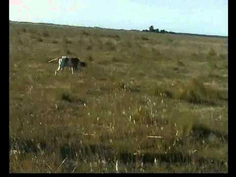 caza de perdiz mayo 2011