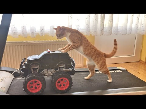 Cat Riding A Monster Truck On A Treadmill