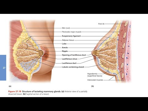 Xxx Mp4 Mammary Glands In Hindi 3gp Sex