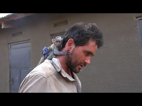 Xxx Mp4 Baby Vervet Monkey Rescued From African Brush Fire 3gp Sex