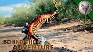 A Centipede