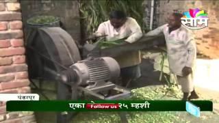 Appa Aaosekar 's diary farming success story.