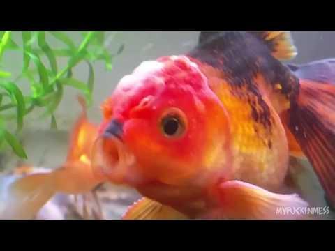 Xxx Mp4 Offensifish Mp4 3gp Sex