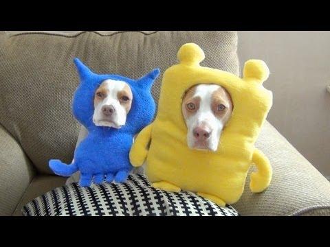Ultimate Dog Shaming 2:  Cute Dog Maymo & Puppy Penny