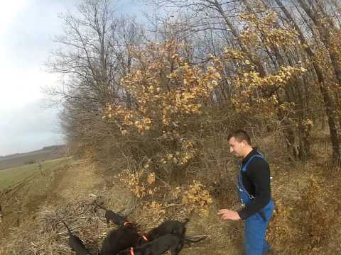 lov na diva svinq v gorsko slivovo. murzina