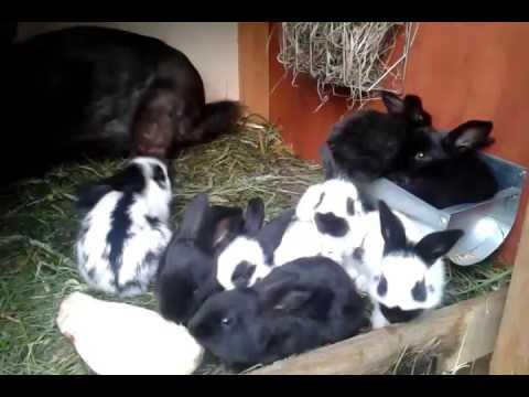 Moja chodowla królików.