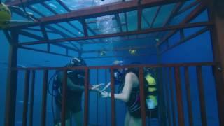 47 meters down movie clip camera 2017 mandy moore shark thriller movie hd mp4
