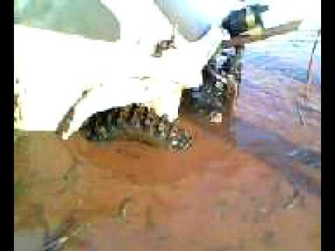 fusca baja na agua