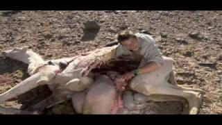 Ultimate Survival - Bear Grylls eet geit en kameel.