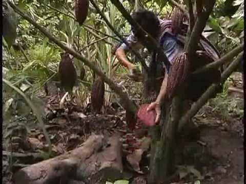 Mundos de Cacao Parte 2