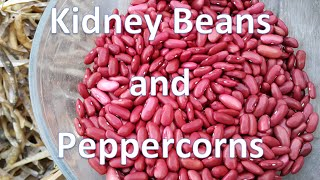 Kidney Beans and Peppercorns