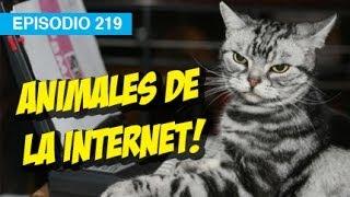 Animales de la Internet l whatdafaqshow.com