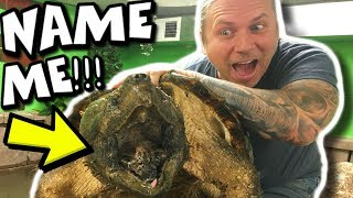 HELP ME NAME MY NEW ALLIGATOR SNAPPING TURTLE!!! Brian Barczyk