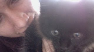 The kitten is so cute... he gets his own video! Mittu the Six Toed Schnooklepuff