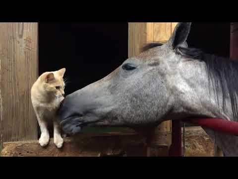 Horse Grooms Cat With Tongue - 986429