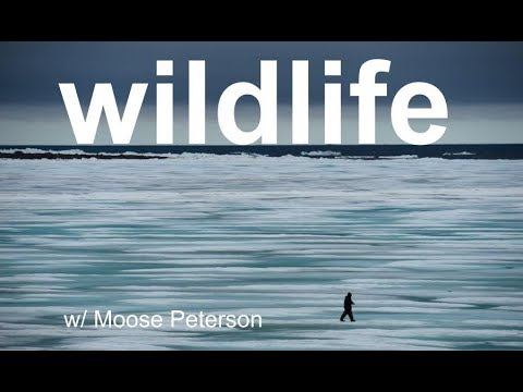 Xxx Mp4 Wildlife Photo Review With MOOSE PETERSON 3gp Sex