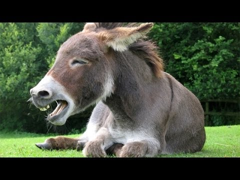 Man Has SEXX With A Donkey