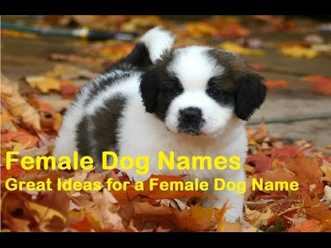 Xxx Mp4 40 Popular Female Dog Names 3gp Sex