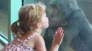 Distraction: Girl apes baby gorilla