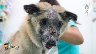 Meeting Hercules The Tortured Dog At Animal Mama Phnom Penh