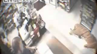A tiger walks into a store