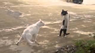 مضحك جدا جدا قطط سكرانة تعمل مشاكل