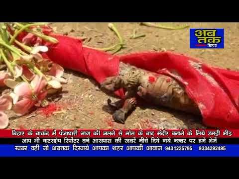 Xxx Mp4 बिहार के गया में पंजाधारी नाग की मौत के बाद देखने लोगों ने उमड़ी भीड़ 3gp Sex