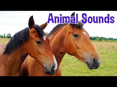 Animal Sounds for Children 20 Amazing Animals
