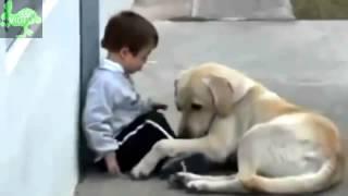 Video Kisah Nyata Cinta Sedih Mengharukan Video Kisah Nyata Anjing Setia Menyayangi Anak Idiot1