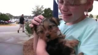 puppy surprise compilation NO:32