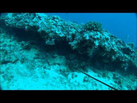 Spearfishing Hawaiian Style 1.0 3 prongin