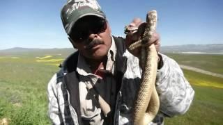 Rattlesnake Bite Survival 101