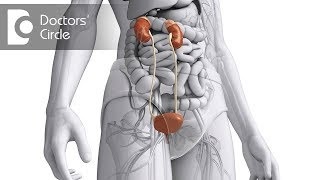 What are the causes & symptoms of Glomerulonephritis? - Dr. Pallavi Patri