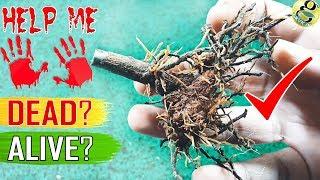 SAVE A DYING PLANT: Tips/Hacks | How to Tell My Plant is Dead or Alive? | Revive a dead plant