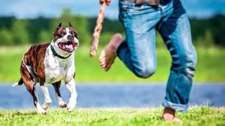 هل تعلم ما يجب عليك القيام به عندما تهاجمك الكلاب