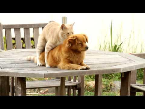 dog & cat gay???