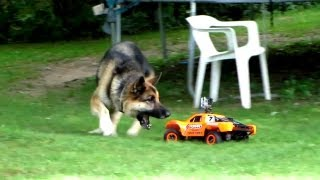 Dog VS R/C Car - Fun with the Family!
