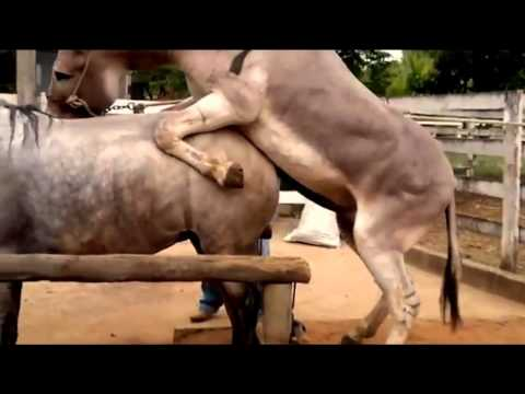 Xxx Mp4 Horse And Donkey Mating And Feeling So Tired 3gp Sex